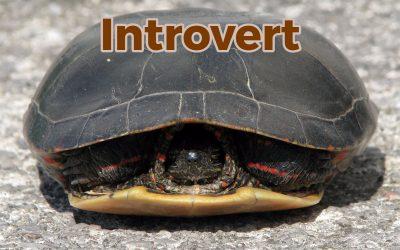 Met een introvert krijg je geen ruzie