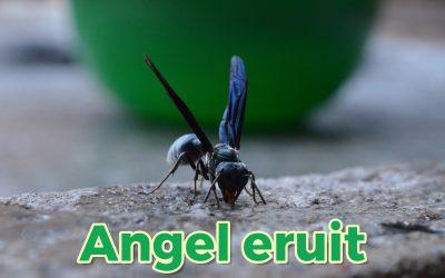 Haal de angel eruit